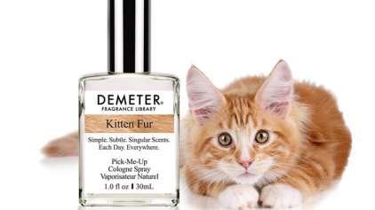 """Empresa lança perfume """"Cheiro de gatinho"""""""