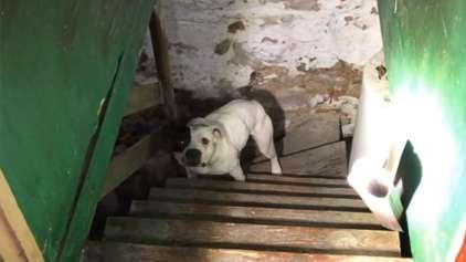 Homem compra casa e descobre Pit bull acorrentado no porão