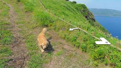 Mapeamento do Google sofre constante photobomb de cãozinho