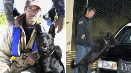 Conheça Lucas, o cão que salvou o seu parceiro da morte