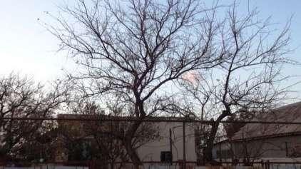 Estranho acidente químico deixa cidade sem pássaros