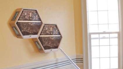 Que tal ter uma colmeia de abelha na sua sala ou cozinha?
