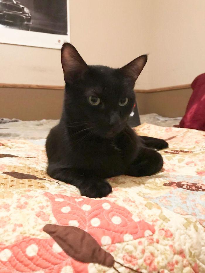 Gato foge e volta 5 anos depois de forma incrível