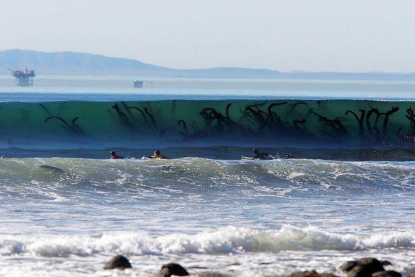 24 imagens que provam que a natureza é assustadora