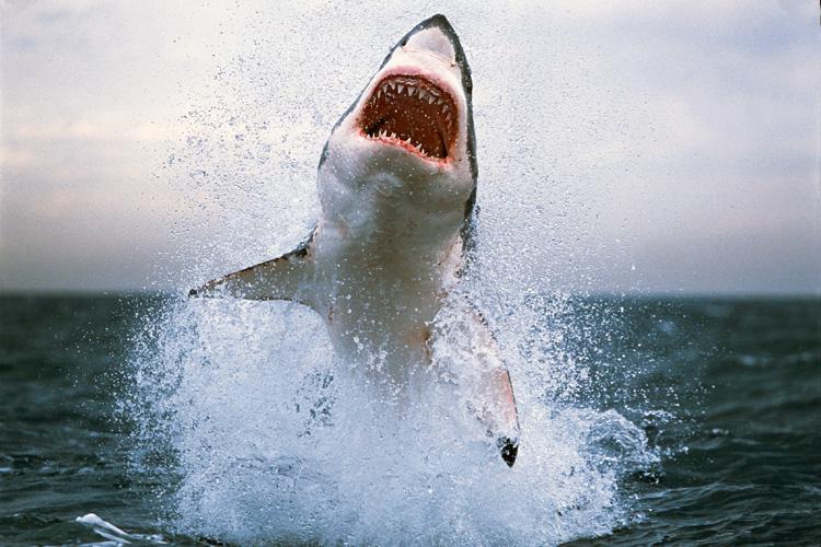 Homem grava ataque de tubarão a caíaque