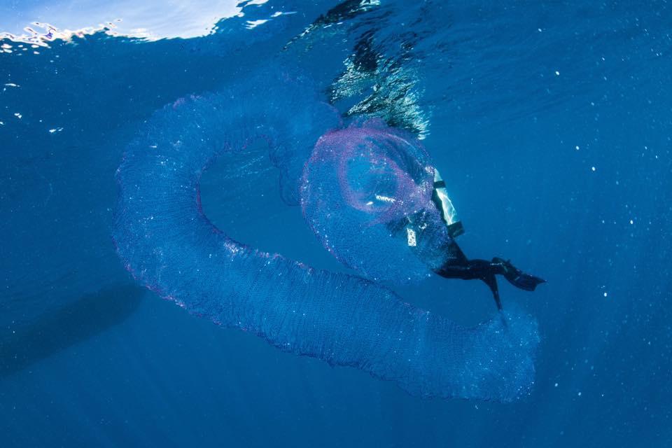 Outra criatura marinha assustadora é encontrada