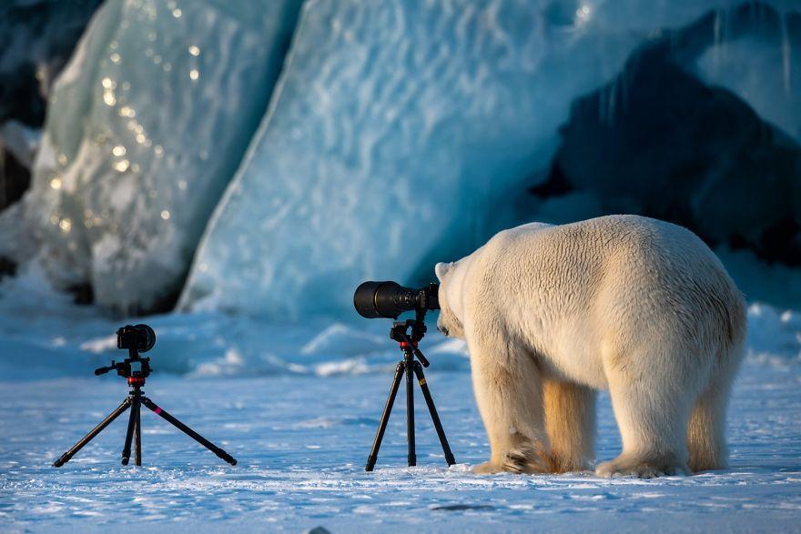 Confira os 41 finalistas das fotos mais engraçadas da natureza