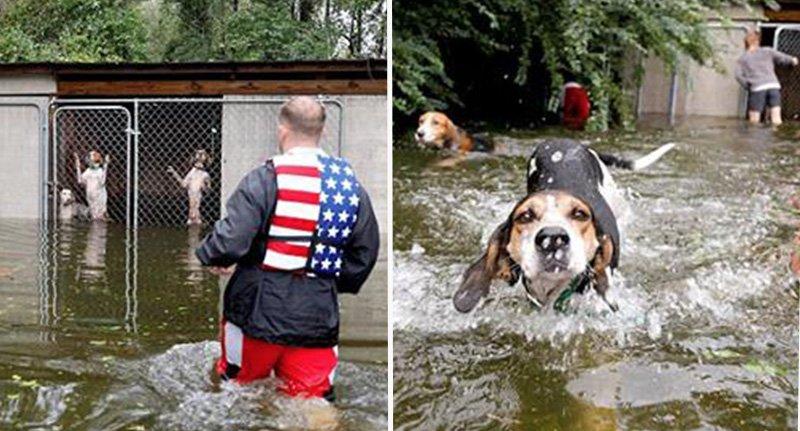 Vídeo mostra resgate de cachorros presos durante furacão