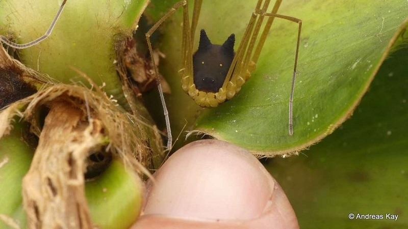 Foto mostra curiosa aranha com