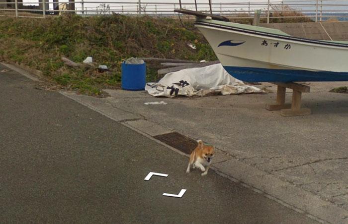 Cão segue carro do Google Maps e vira fenômeno no Japão