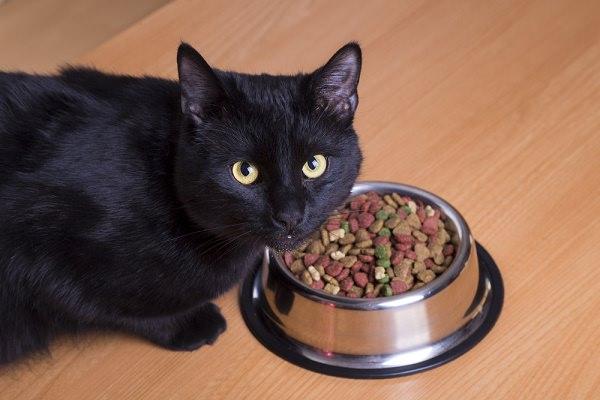 Estudiosos dizem que estamos alimentado os gatos do jeito errado