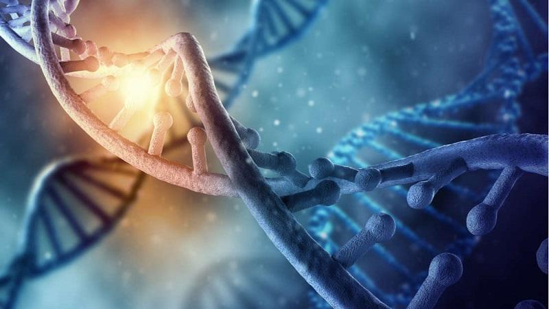 Pela primeira vez cientistas alteram DNA em um humano adulto