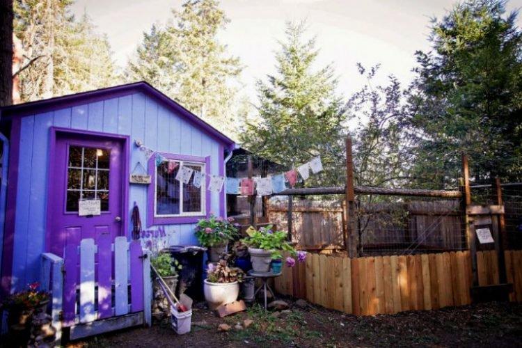 Conheça a vila dos Pit bulls com casas reais para os animais
