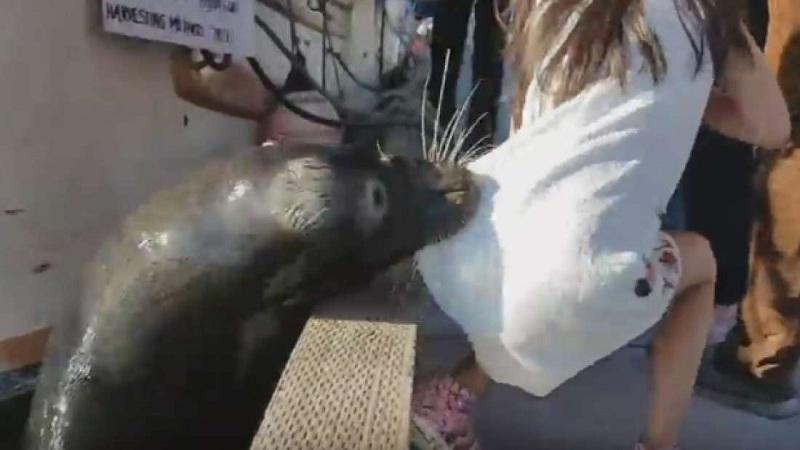 Leão Marinho quase afoga garota no Canadá