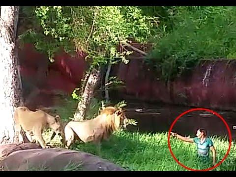 Indiano pula dentro de jaula do Leão e quase é comido
