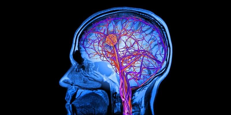 Cientistas descobrem que nosso cérebro