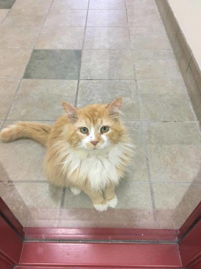 Gato anda 19 km para voltar pra casa e é rejeitado de novo