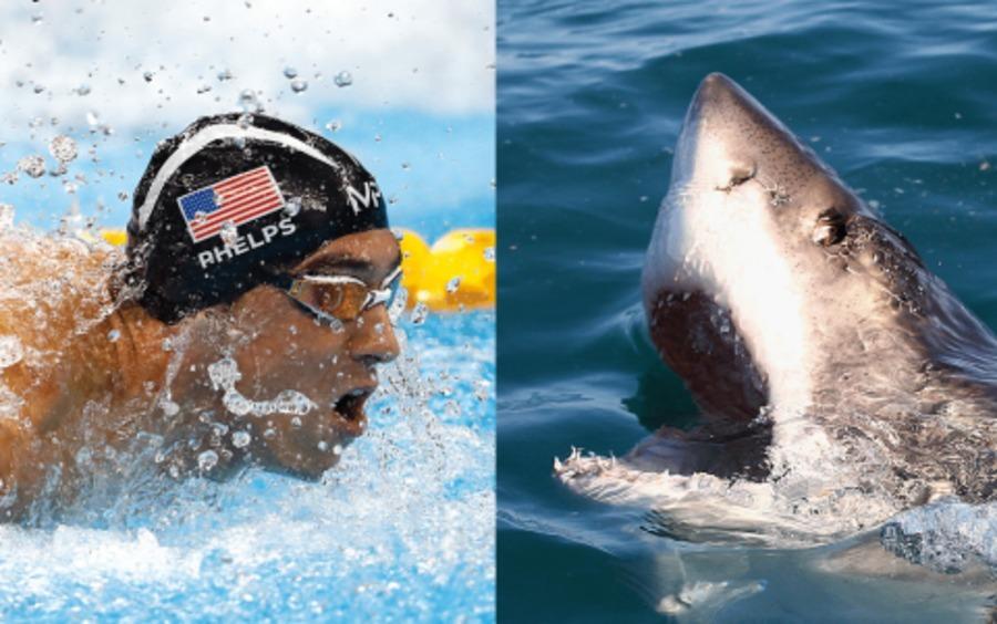 Michael Phelps volta da aposentadoria para enfrentar um tubarão