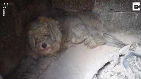 Cachorro se esconde em forno para escapar de fogo na Grécia