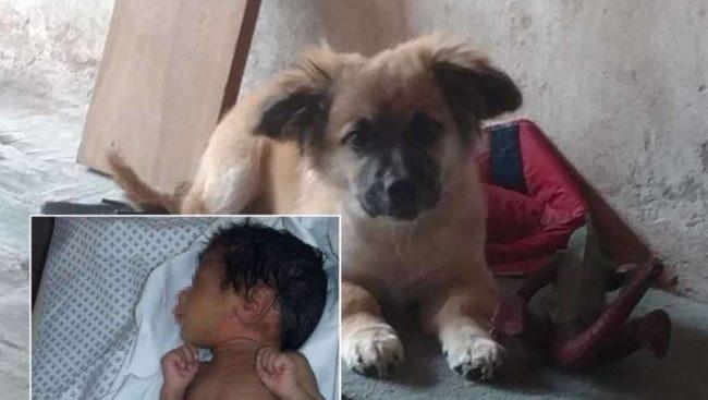 O faro desse cão descobriu algo chocante abandonado em um terreno