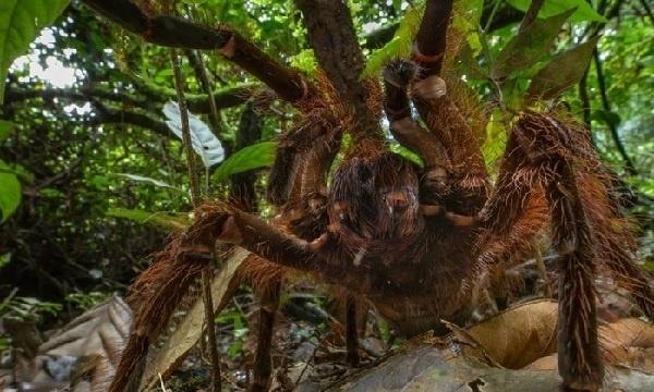 Homem encontra aranha com o tamanho de um cachorro pequeno