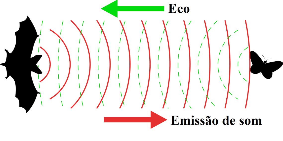 Esquema representando a ecolocalização em morcegos